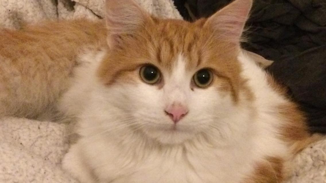 Il 17 Febbraio si celebra la Giornata Nazionale del Gatto