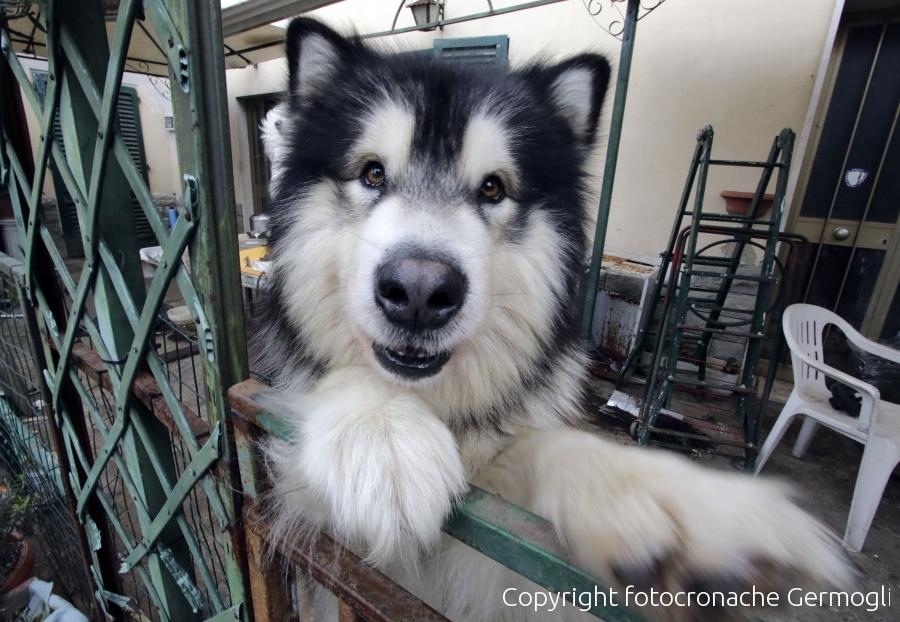 Cane chiuso in terrazza, multa di 320 euro Notizie dalla toscana