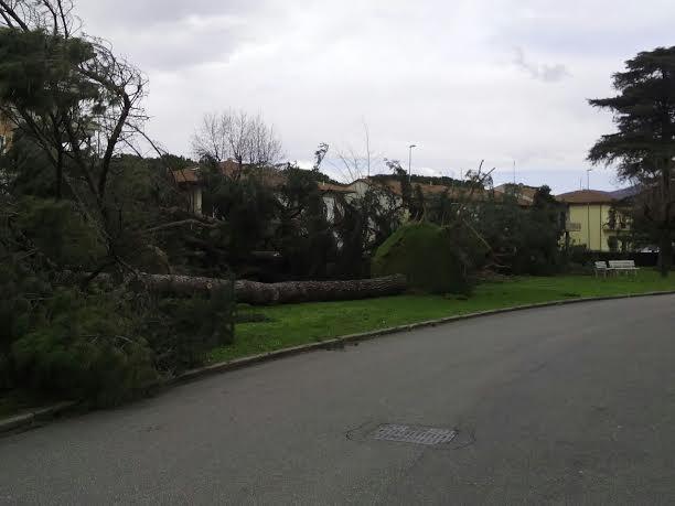 Firenze, alberi ed oggetti pericolanti per il forte vento