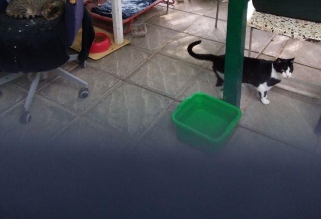Passioncats adottati firenze tanti cuccioli al gattile di bagno a