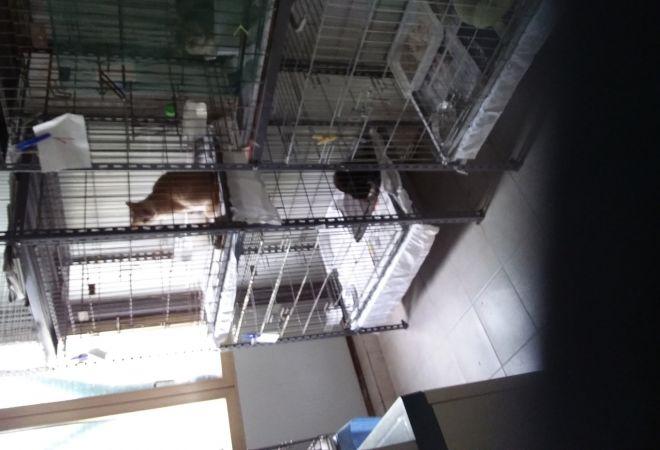 Volontariato gatti toscana provincia di firenze gattile