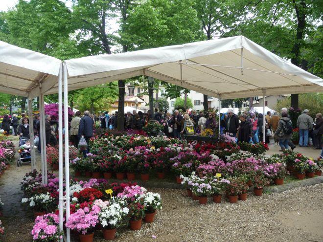 Greve la 43esima mostra mercato di piante e fiori for Mostre mercato fiori 2017