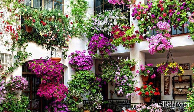 Al via \'Balconi in fiore\', si premiano i fiori sulle terrazze ...